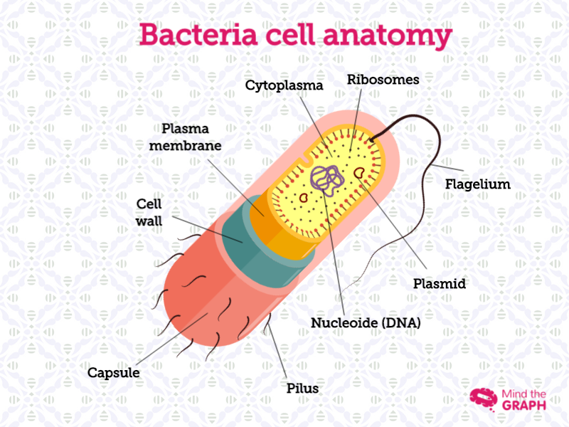 Bacteria Cell Anatomy | Mind the Graph