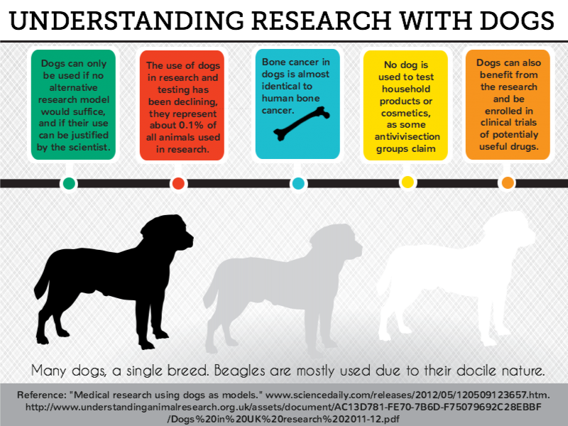 Dog research
