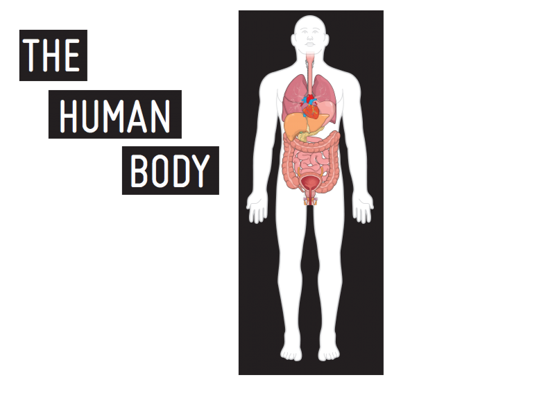 Human Body Mind The Graph