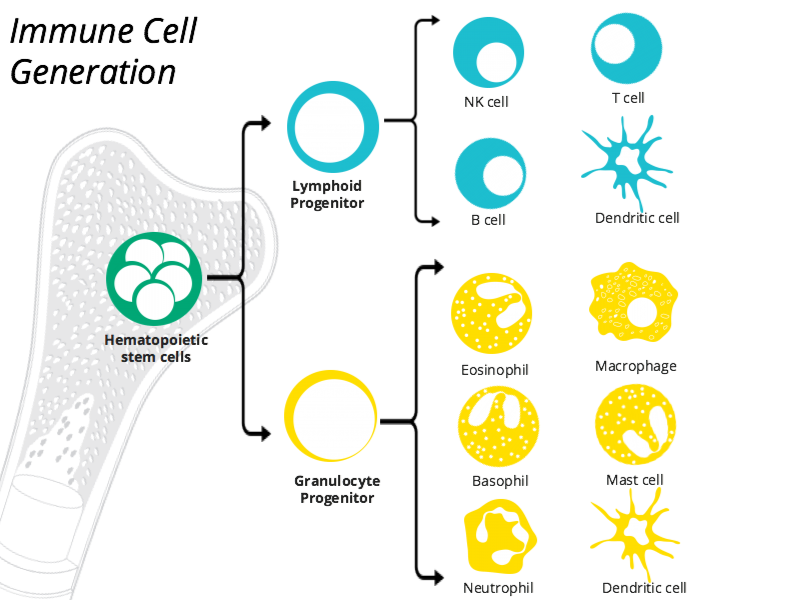 Immune cell generation icon