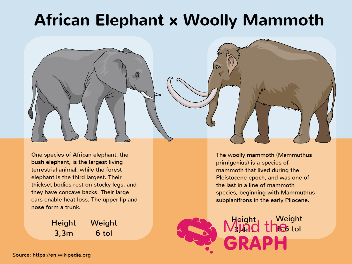 African Elephant x Wolly Mammoth