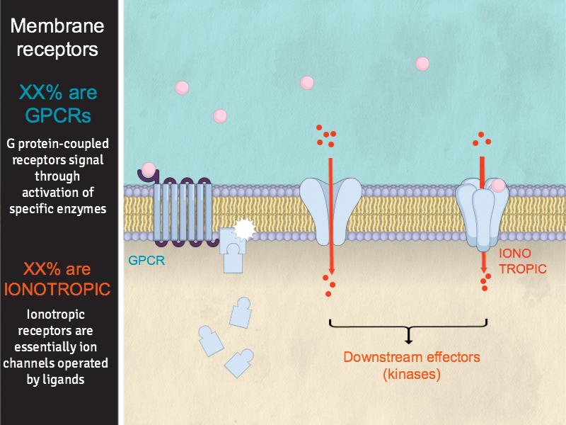 Membrane receptors