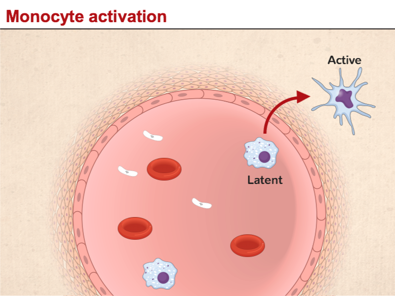 Monocyte activation
