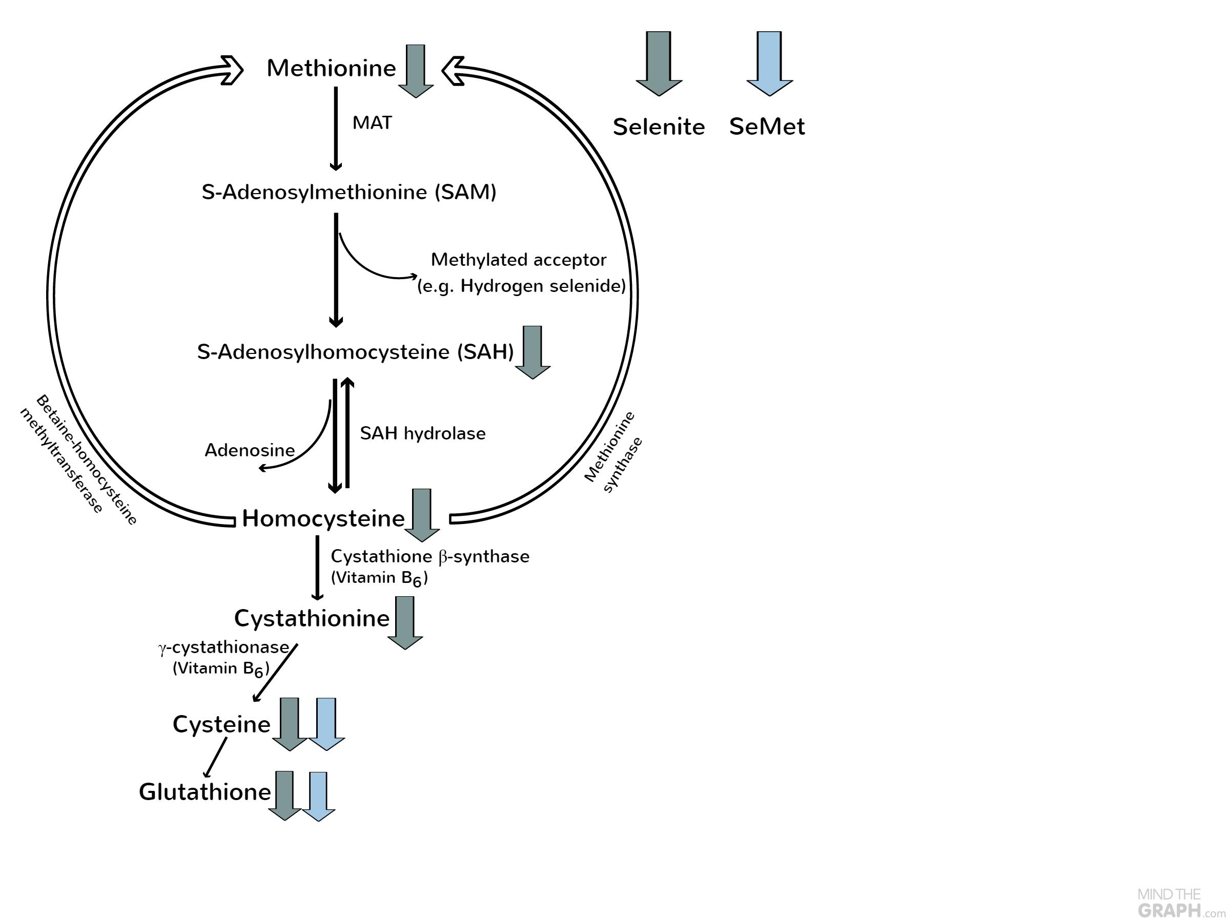 SAM Cycle