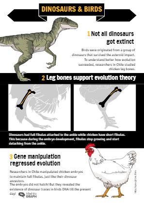 Dinosaurs & birds