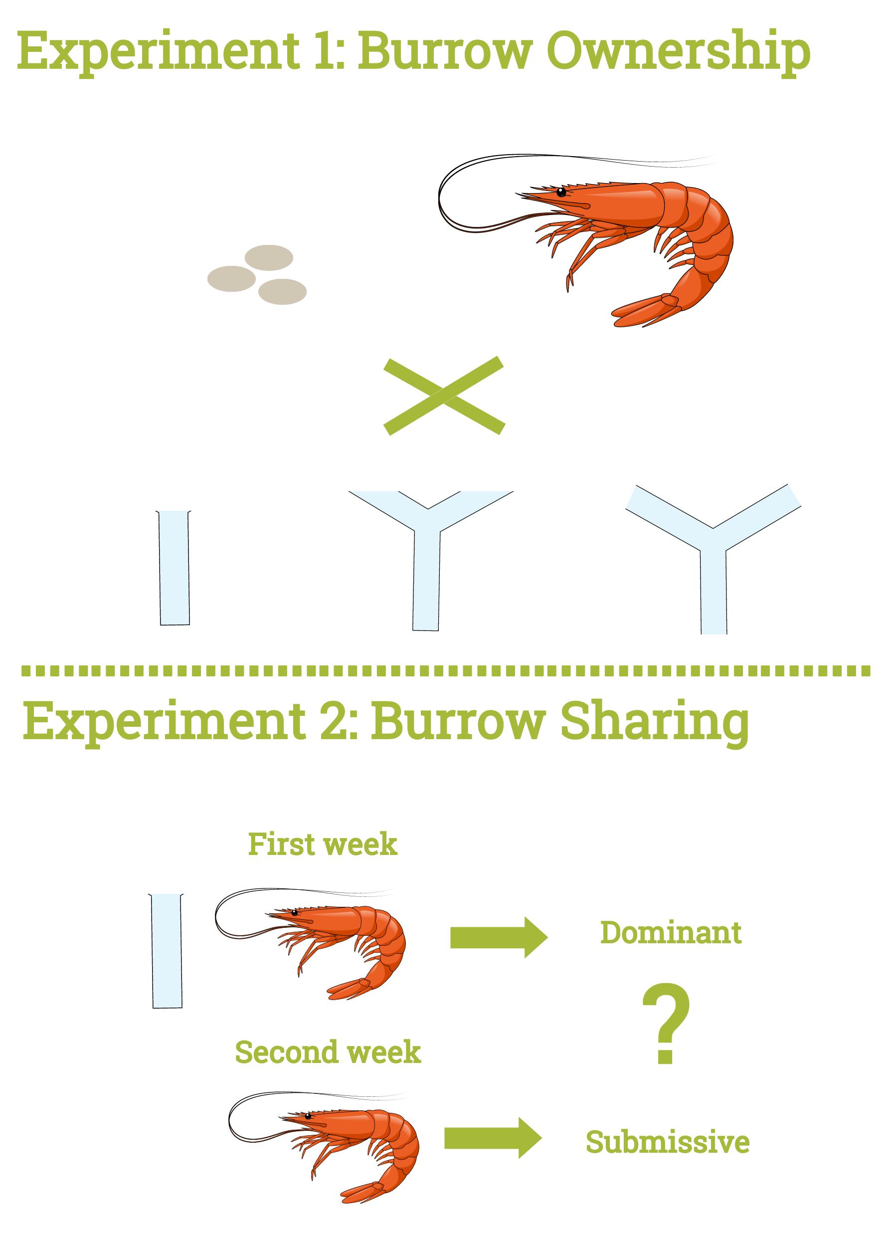 Crustacean presentation