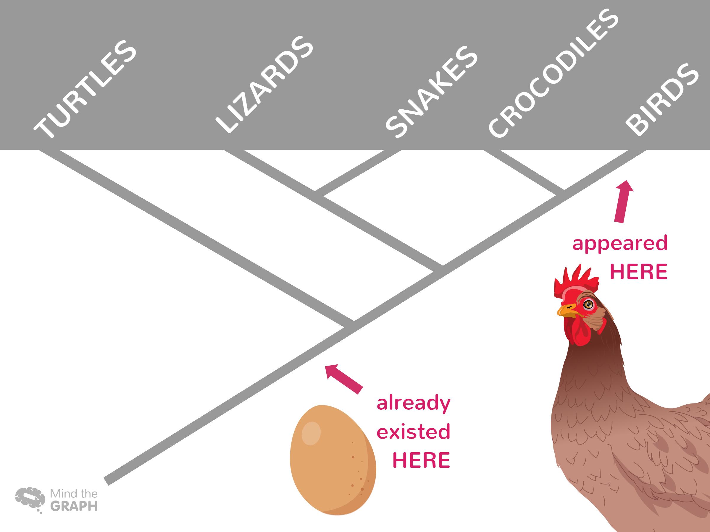 Egg x Chicken